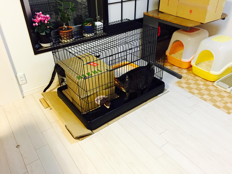ケージのまわりで遊ぶ猫