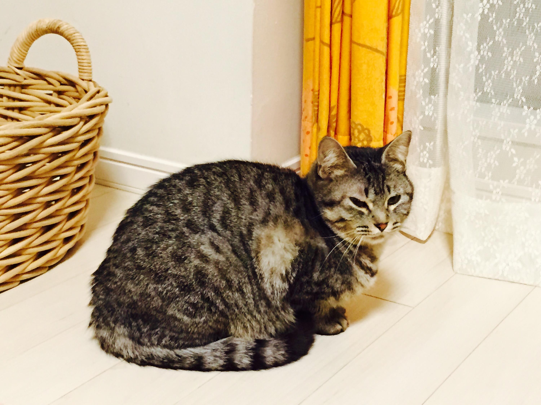 黒木メイサ似のクールビューティー猫