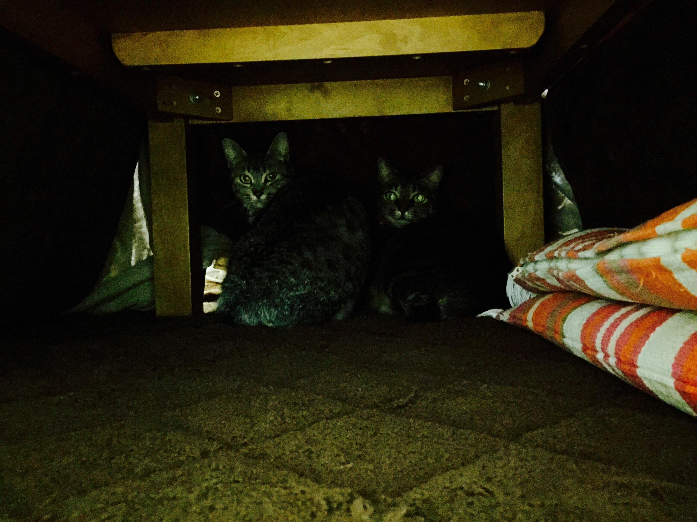 こたつの中にいる猫