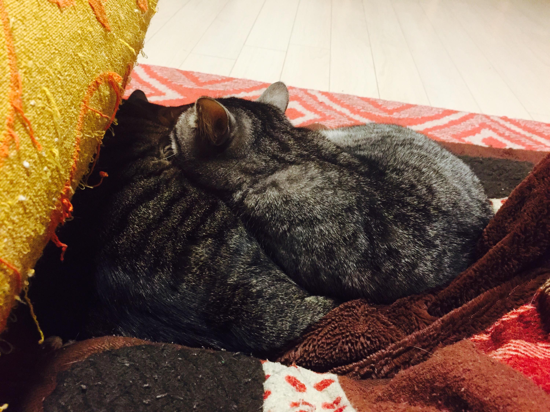 キジ猫と灰トラ猫の団子
