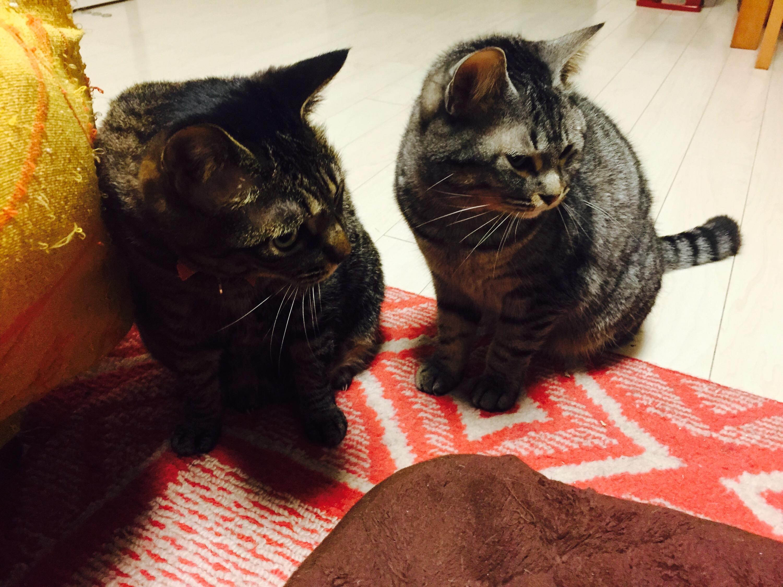 寄り添うキジ猫と灰トラ猫