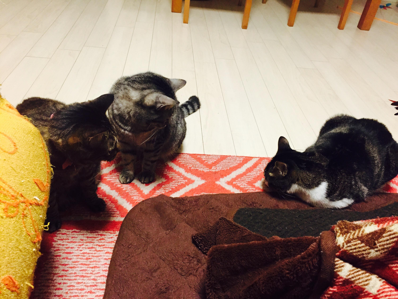 1頭の猫を見る2頭の猫