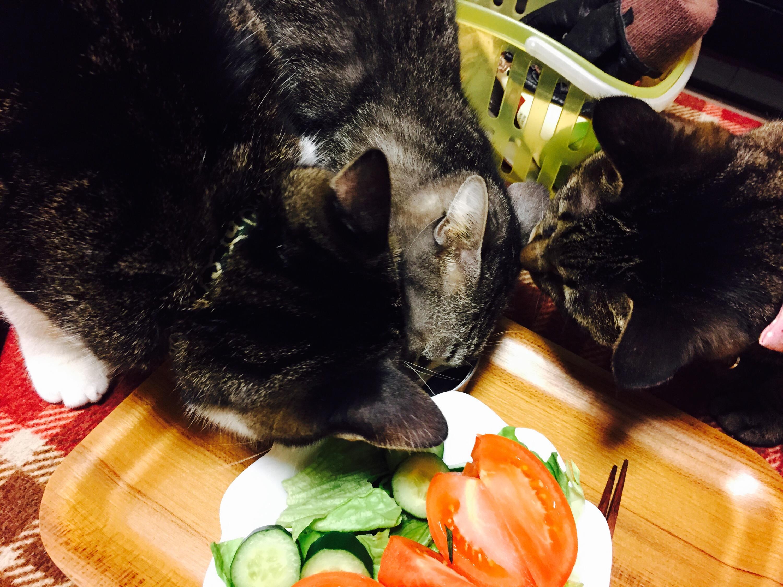 三匹でニンゲンの食べ物に群がる猫